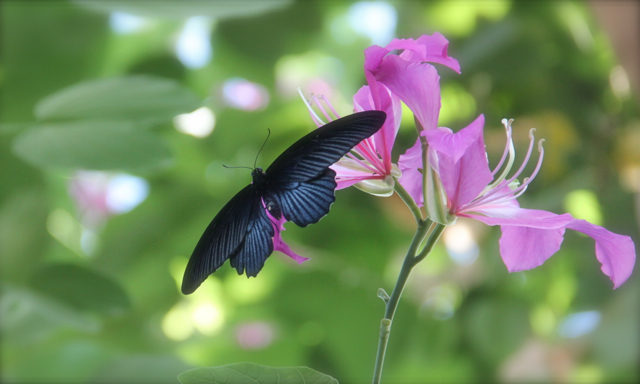 blue black and pink