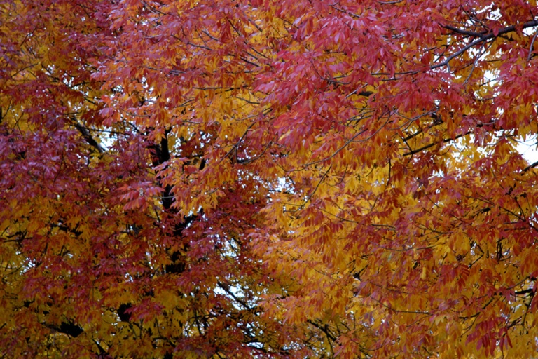 red and yellow leaves