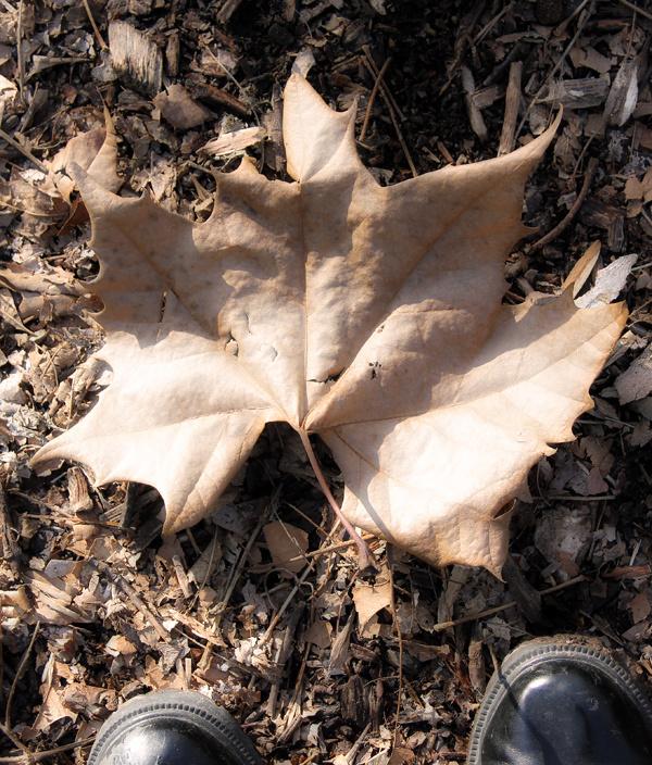 leaf at my feet