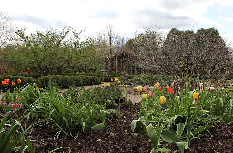 trellis and tulips
