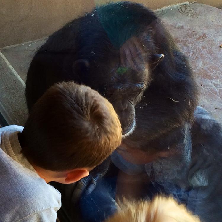 alex and gorilla