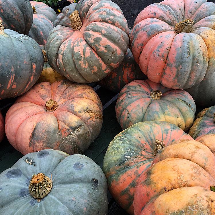 colored pumpkins