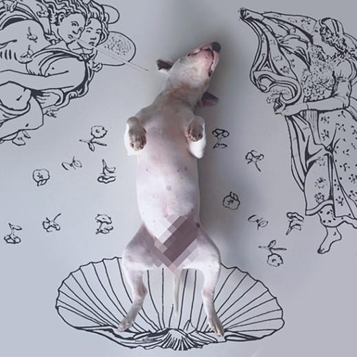 Botticelli Bull Terrier © @rafaelmantesso