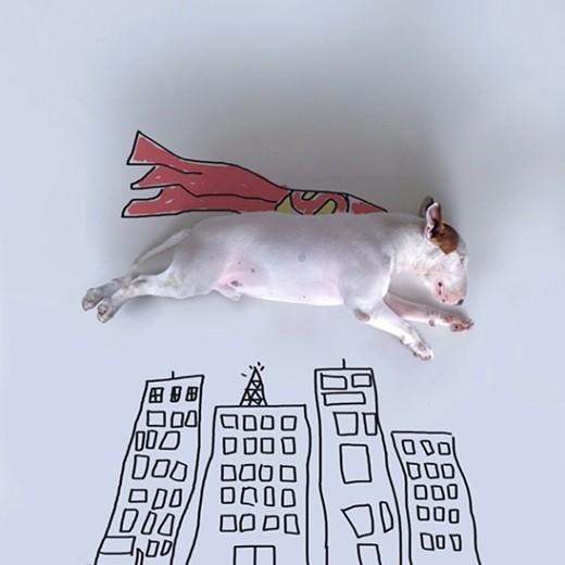 Super Bull Terrier © @rafaelmantesso