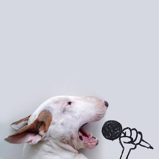 Karaoke Bull Terrier © @rafaelmantesso