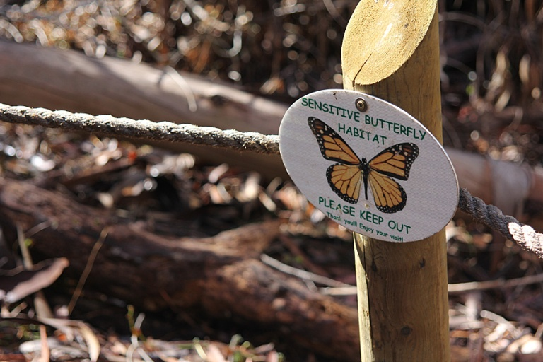 butterfly sign2