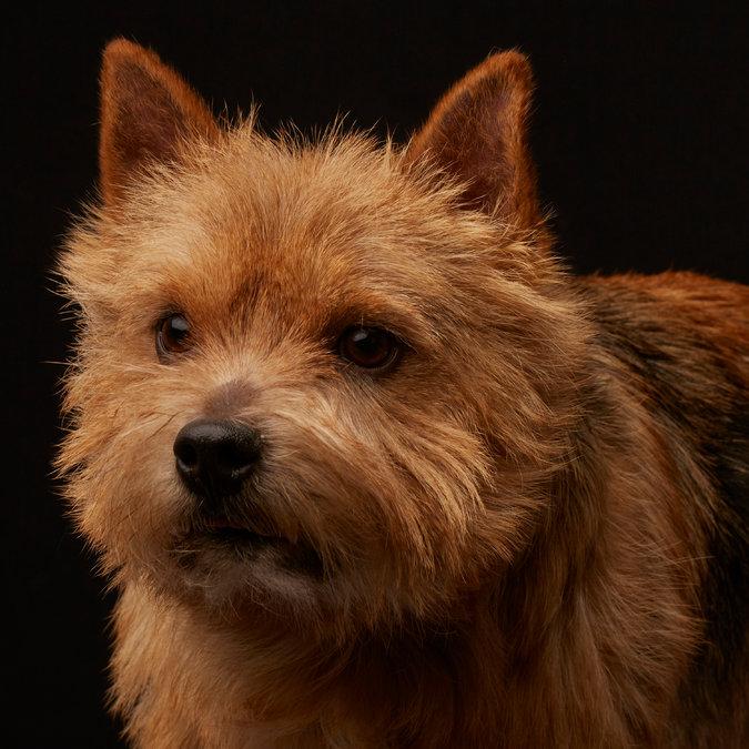 3dog-master675
