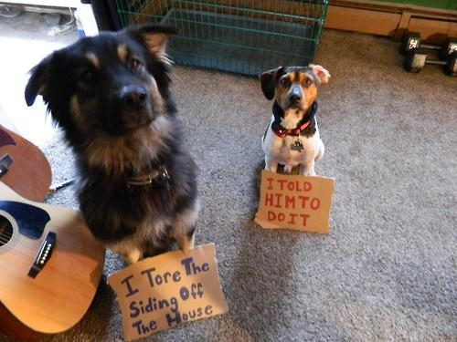 100-best-dog-shaming-moments--large-msg-134885862148