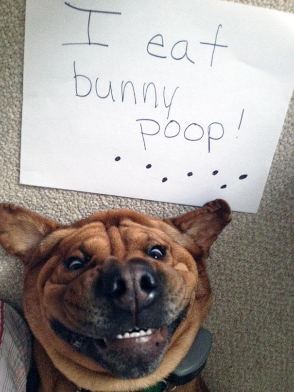 dog-shaming-3__605
