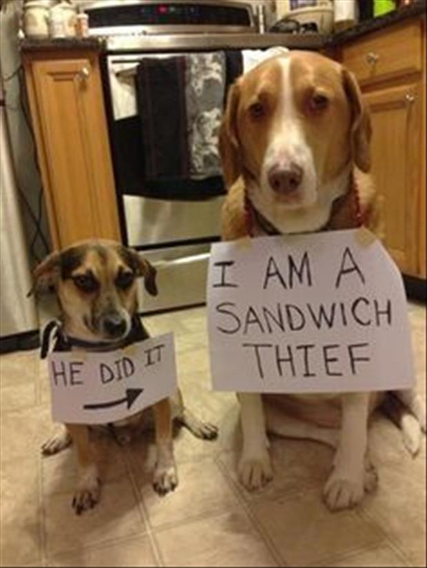 dog-shaming-meme-sandwhich-thief