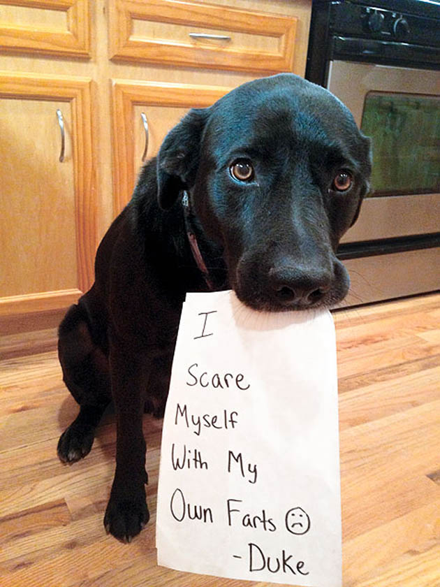 guilty-dog-shaming-fart