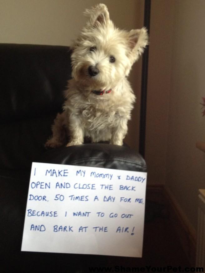 pet-dog-shaming-open-door-bark