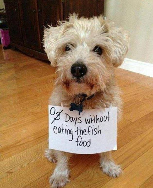 Vh-12-22-2012-hilarious-dog-shaming-photos-funny-dogs14